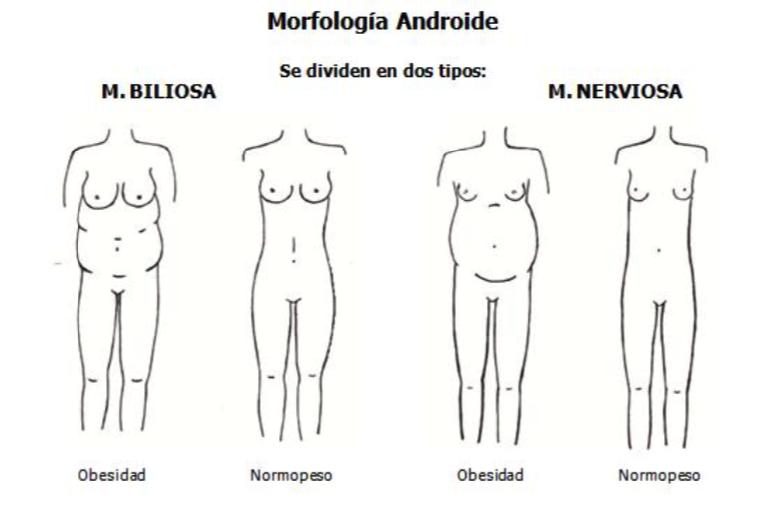 Morfologia Androide