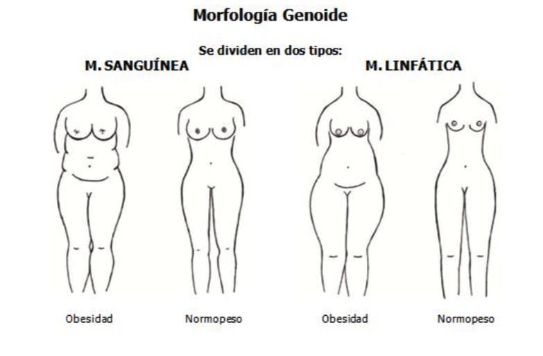 Morfologia Genoide